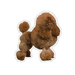 TOY POODLE   Dog Decal   sticker car got window gift
