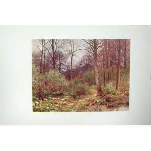 COLOUR PRINT c1920 GAMEKEEPERS COT TREES FOREST WOOD